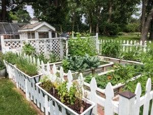 Garden (2) 7.1.15