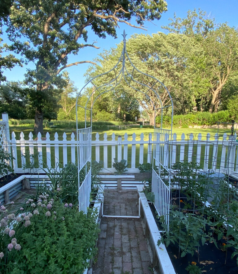 5 Tips for Growing A Successful Vegetable Garden