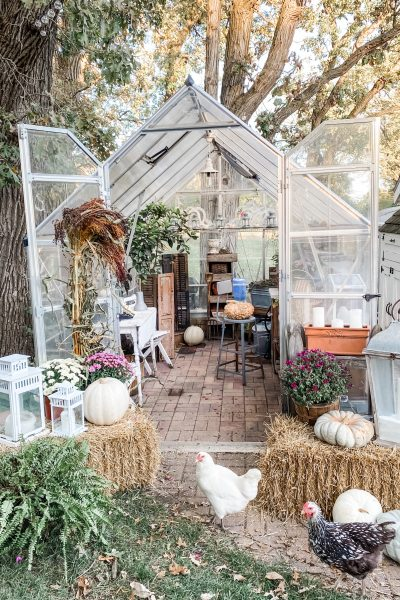 Fall greenhouse decor with chickens