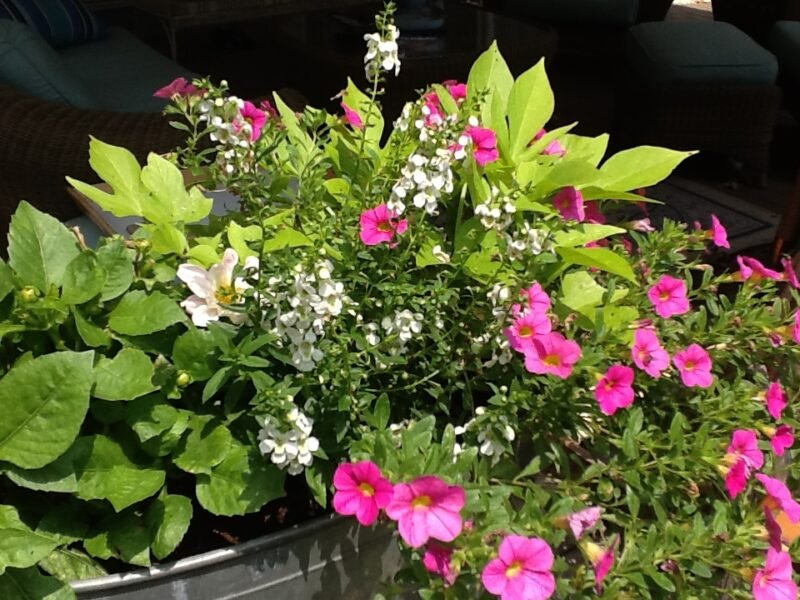 Galvanized Tub filled with pink and white flowers