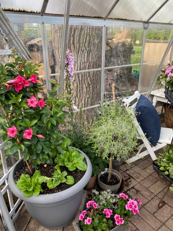 This is a picture of more flowers in my greenhouse ready to plant