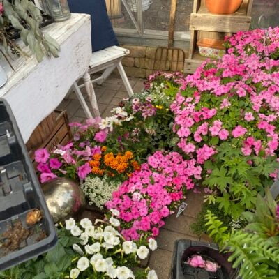 Picture of my greenhouse filled with annuals from the nursery waiting to be planted in the garden