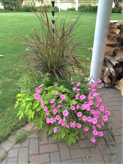 Annual Flowers in a Pot on Brick Patio