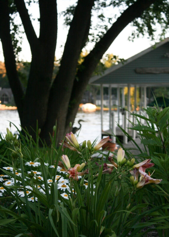 Perennial Flower Bed by the River with a Heron hiding behind the tree
