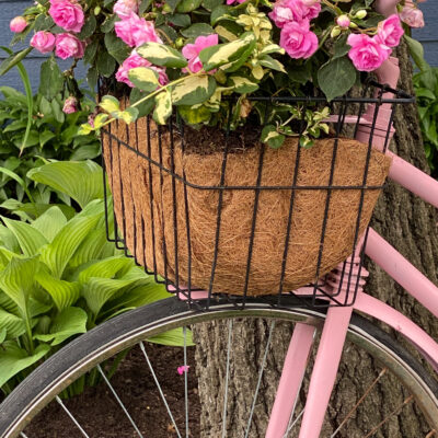 Vintage Pink Bike with flower basket on front handle bars filled with pink double impatiens