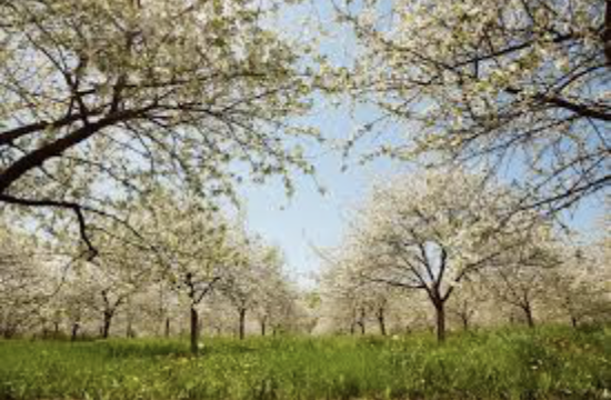 Spring Time in Door County