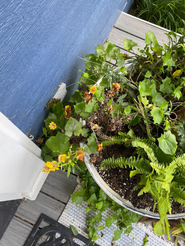picture of the pots on my porch that need to be refreshed for fall. This picture is all the plants that are dying back from summer